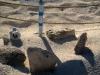 Nido de tortugas protegido