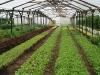 35b. Caoba Farms