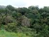 17. bosque en Buena Vista Lodge