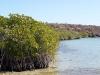 Los manglares junto al mar
