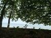 04-Parque-Nacional-Cahuita