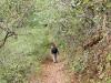 05. Caminando por el bosque