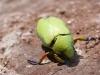 11. insecto loco