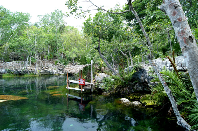 Viajerosustentable blog archive cenote jard n del ed n for Jardin del eden
