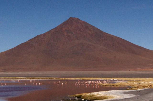 37.Flamencos.en.Laguna.Colorada