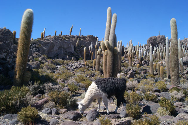 51.Isla.Inca.Huasi