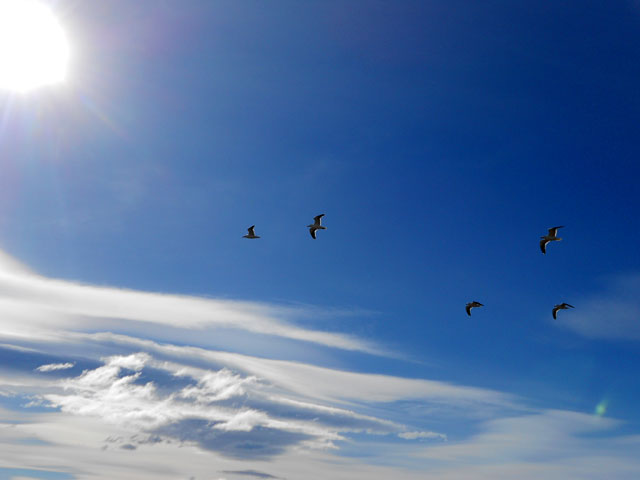 14-vuelo-aves-Calafate