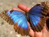 23 Mariposa de Calakmul