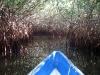 11. Paseo por los manglares