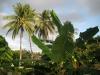 23. Platanos y palmeras