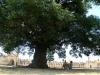 02. Descansando bajo el gran arbol