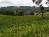 02.Campo.de.maiz