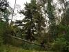 10.Ale.en.bosque.Eucaliptos