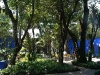 23. Arboles en el patio de la casa de Frida