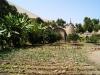 04.Cultivos.organicos