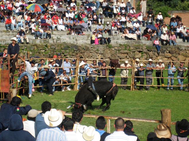 Montando al toro