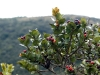 05-Flora-Guatavita