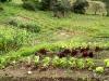 20-huerto-organico