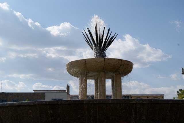 Fuente de agave