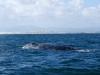 Viendo más ballenas
