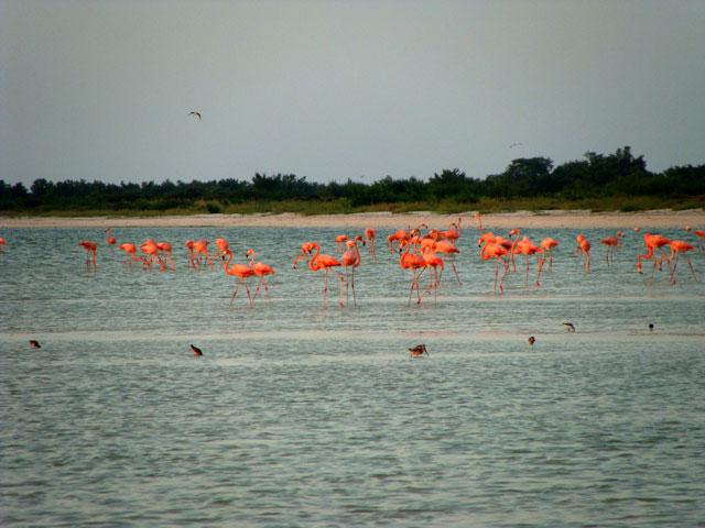 17 La casa de los flamingos