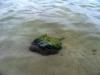 15 Mundo acuatico Holbox