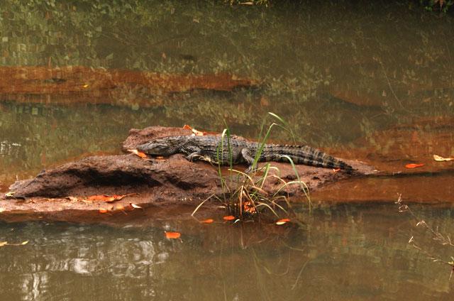 04-P.N.Iguazu