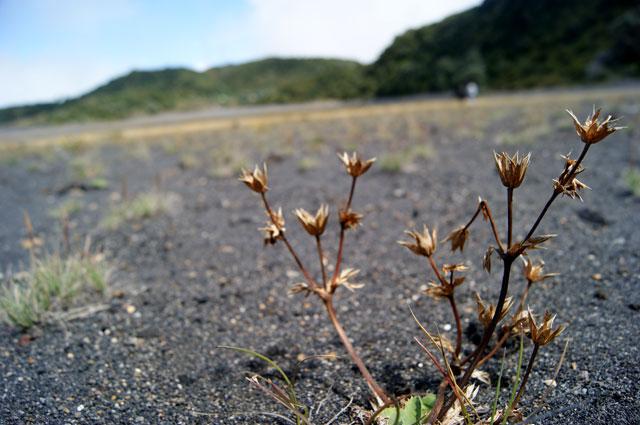 08-Flora-Volcan-Irazu
