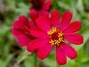 Flor de Finca Ixobel