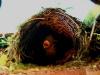 Nido de pájaro en nuestra casa del árbol