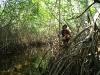11 Eli inspeccionando el manglar