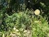 06. Espiral de hierbas en IMAP
