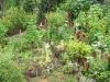 16. Cultivos en IMAP