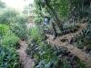 21. Terracitas de cultivo en IMAP