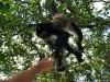 10. Eli da de comer al mono