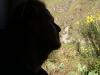 00-Tren-ollantaytambo-Aguascalientes