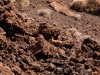 07-conejo-silvestre-eserva Provincial Payunia