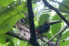 Refugio de Vida Silvestre Manzanillo Gandoca