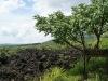 13 Valle de roca volcanica