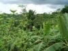 05. Sistema agroforestal