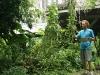 23. cosechando malabar spinach