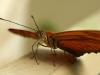 26. mariposa