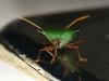 06. Insecto del Putumayo