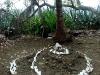 21-Cementerio-Isla-Cabuya