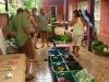 29-Feria-organica-Montezuma