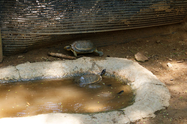 09.Tortugas-terrestres