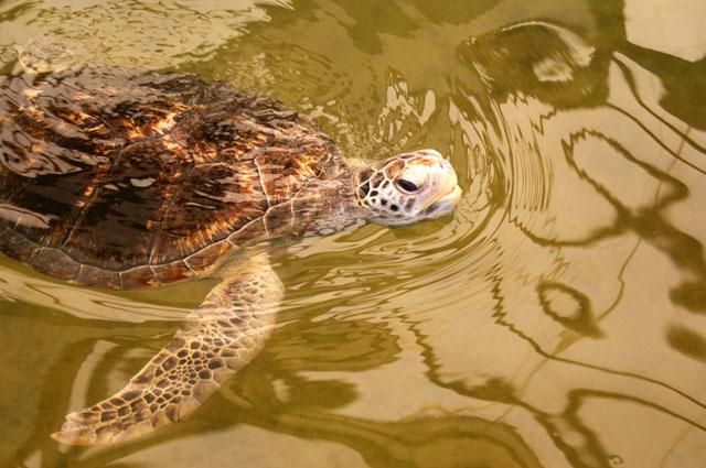 10.-Tortuga-en-un-estanque