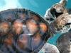 14.-Tortuga-marina-adulta