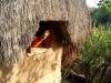 20d. Ale en la ventana de la cabana (2)