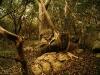 17-Bosque-ombues